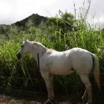 Lahaina Stables - Horseback Riding Tour