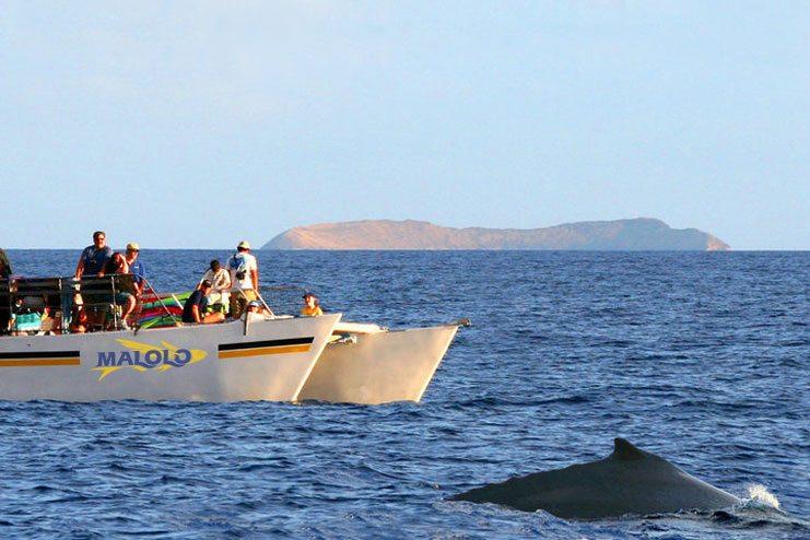 Whale watching aboard Malolo