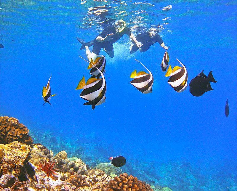 Molokini crater malolo sunday snorkel trip for Molokai fish and dive