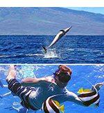 Kaulana Lanai Snorkel and Dolphin Watch!