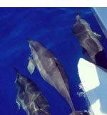 Quicksilver Lanai Snorkeling & Dolphin Encounters