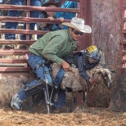 Makawao Rodeo Sheep Rider