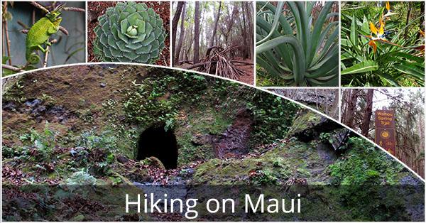 Hiking_On_Maui