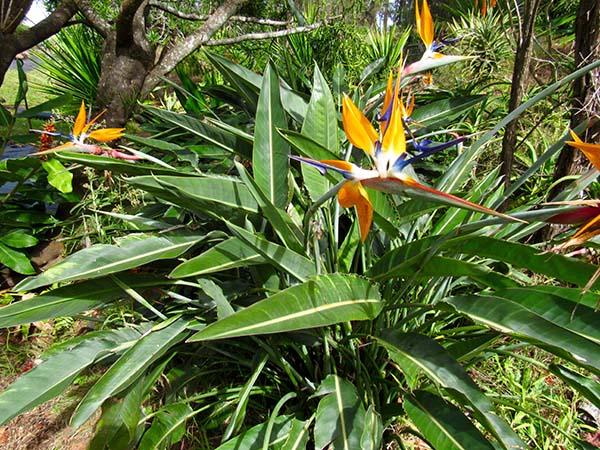 Hiking_On_Maui_Birdofparadise