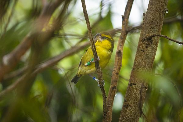 Hiking_On_Maui_Birds