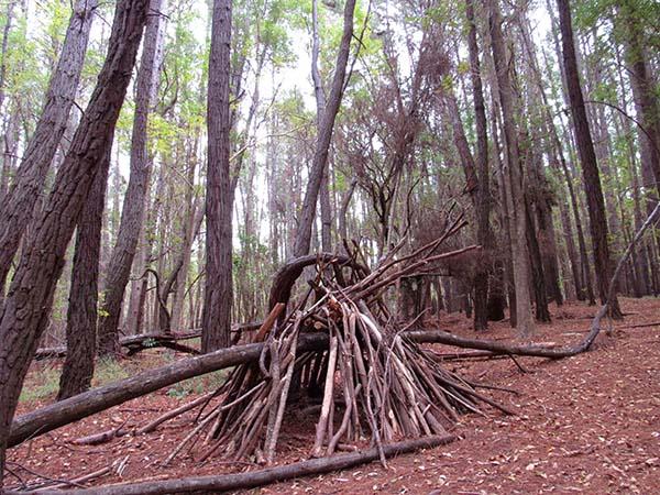Hiking_On_Maui_Forest