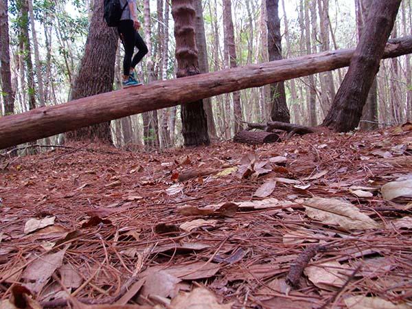 Hiking_On_Maui_Pine