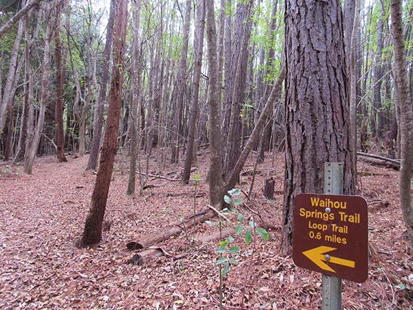Hiking_On_Maui_Waihou