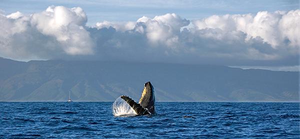 BestViews_Whale